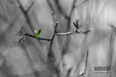 2013-03-03_Diverses_001