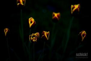 2013-05-08_Natur_002
