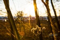 2016-03-18_Zofingen_002