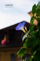 2016-09-02_Zofingen-PIAZZA_1512-0067_1600231_007